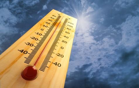 Surviving the un-Bear-able heat