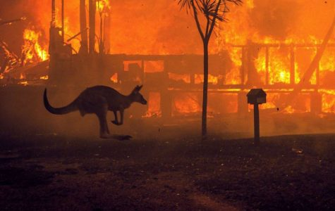 Australia endures devastating fires