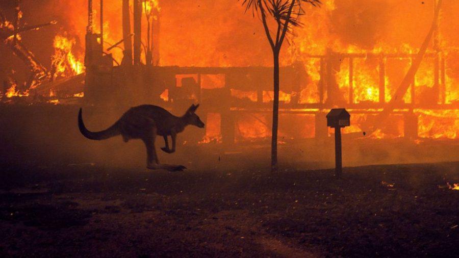 Australia endures devastating fires